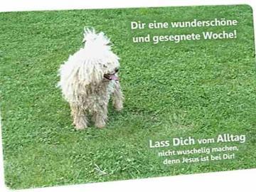 Christliche Postkarte: Hirtenhund - Ermutigungskarte