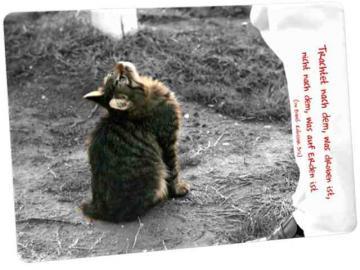 Christliche Postkarte: Nach oben blickende Katze