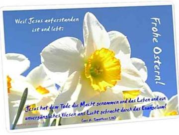 Christliche Osterkarte: Narzissenblüte I