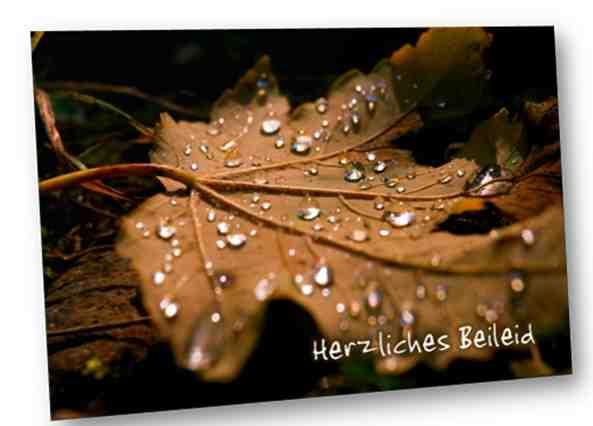 Christliche Trauerkarte: Baumblatt mit Regentropfen