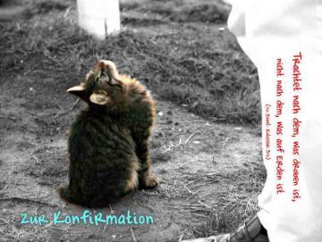 Christliche Konfirmationskarte: Nach oben blickende Katze - Kolosser 3,2