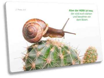 Christliche Postkarte mit Motiv: Schnecke auf Kaktus
