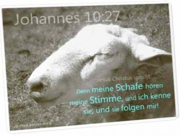 Christliche Postkarte: Schaf