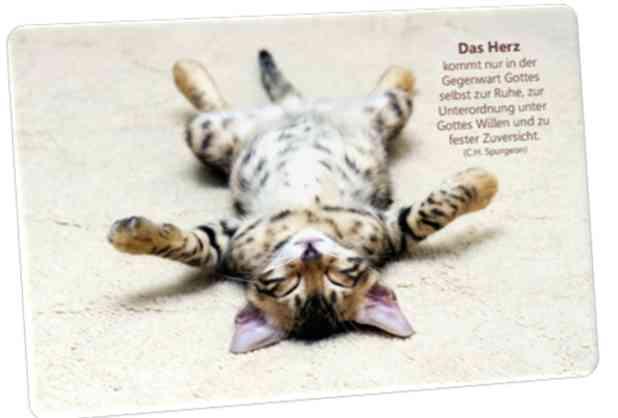 Christliche Postkarte: Katze auf dem Rücken liegend -  Zitat von Spurgeon