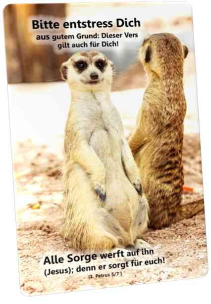 Christliche Postkarte: Erdmännchen in Gegenrichtung schauend - Ermutigung