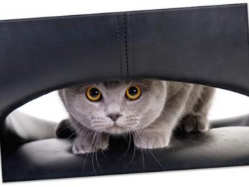 Leinwanddruck: Katze auf Ledersessel