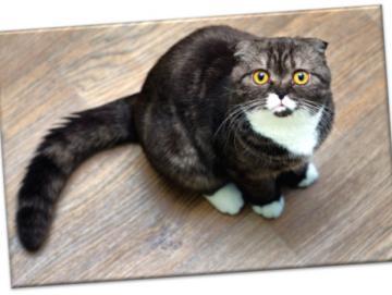 Leinwanddruck: Erstaunt blickende Katze