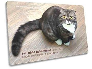 Christliche Postkarte: Erstaunt blickende Katze  - mit Bibelvers aus Nehemia 8,10