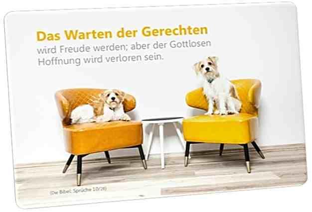 Christliche Postkarte: Hunde auf bunten Sessel - Mit Bibelvers: Sprüche 10,28