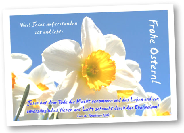 Christliche Osterkarte: Narzissenblüte I - Faltkarte