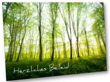Christliche Trauerkarte: Lichtdurchfluteter Frühlingswald