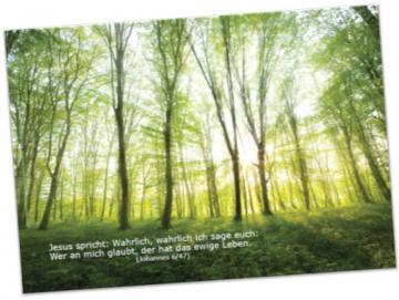 Christliches Poster A2: Lichtdurchfluteter Frühlingswald