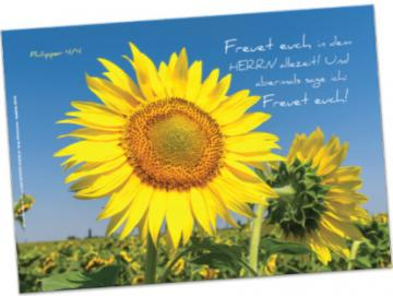 Christliches Poster A2: Sonnenblumevor Steilküste