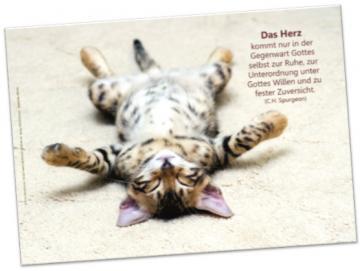 Christliches Poster A2: Katze auf dem Rücken liegend