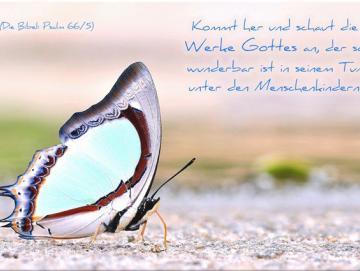 Christlicher Kühlschrankmagnet - Bunter Schmetterling