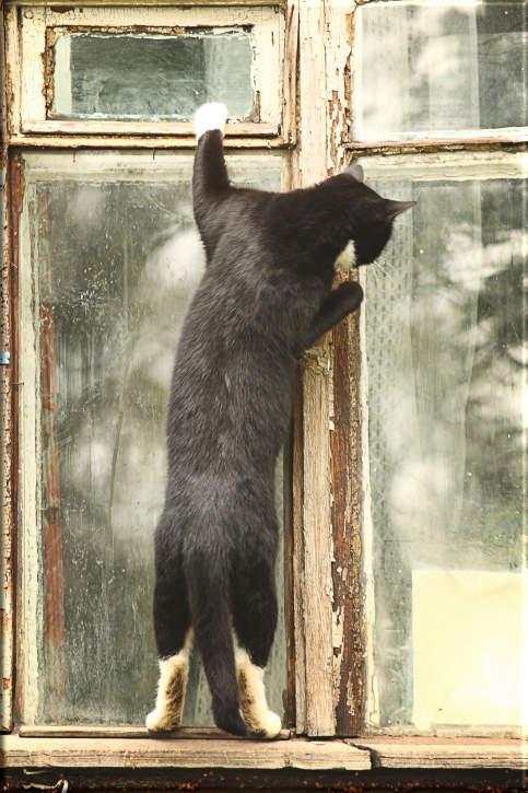 Leinwanddruck Katzen-Motiv: Am Fenster stehende Katze