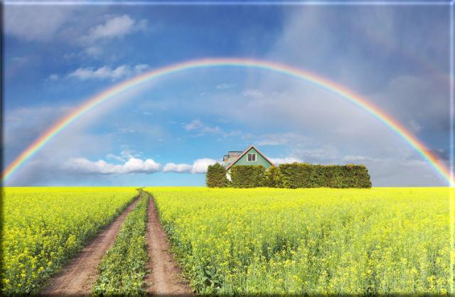 Leinwanddruck: Regenbogen über Rapsfeld - Landschaftsmotiv