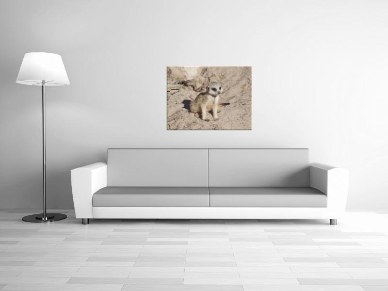 Leinwanddrucke Erdmännchen: Baby Erdmännchen